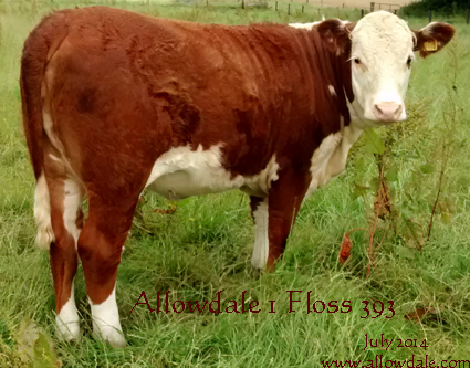 Allowdale 1 Floss