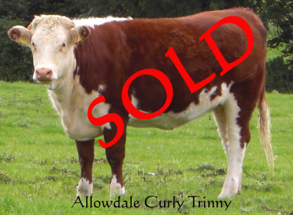 Allowdale Curly Trinny