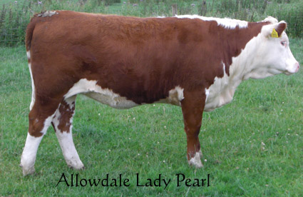 Allowdale Lady Pearl