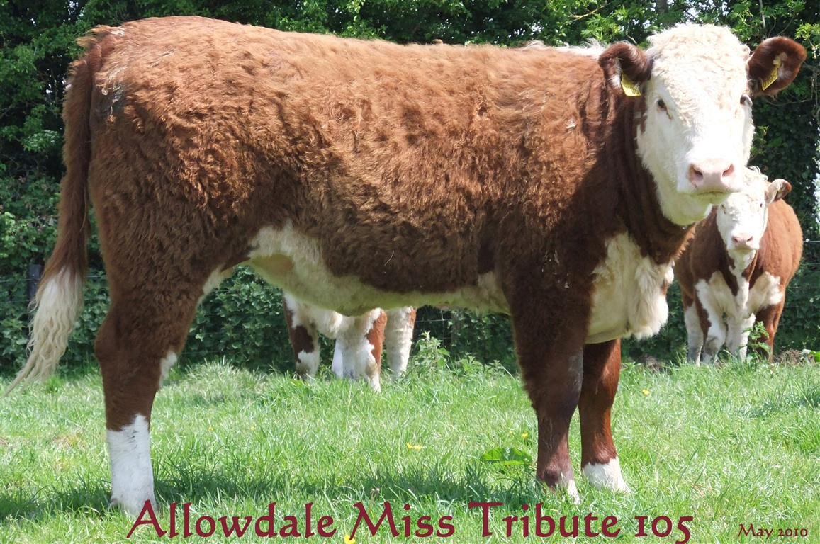 Allowdale Miss Tribute 105